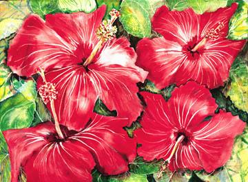 hibiscussmall.jpg