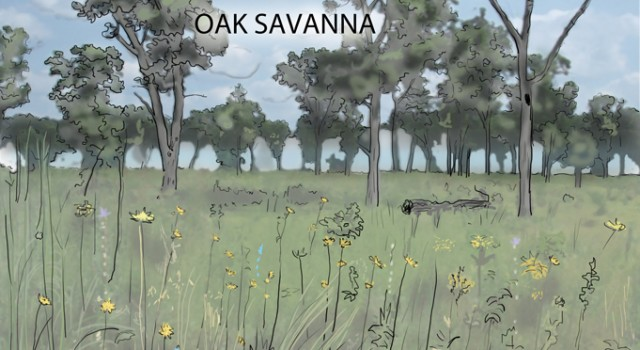Savanna Interactive