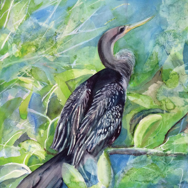 Blue Heron, Anhinga, Grassy Waters