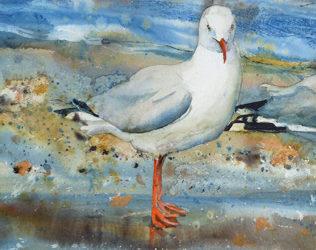 Sea Gull Paintings